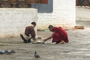Monk doing the dishes in the courtyard. There's one bathroom for 300 monks who reside here.