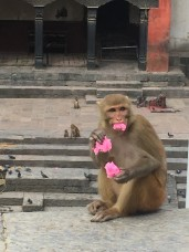 Entertaining monkey
