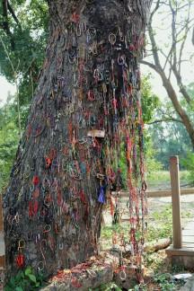 Tree where women and children were beaten to death