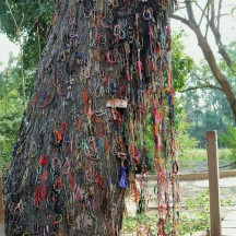 Tree where women and children were beaten to death