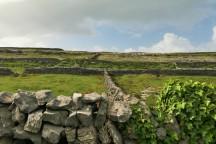 Aran Island paddocks